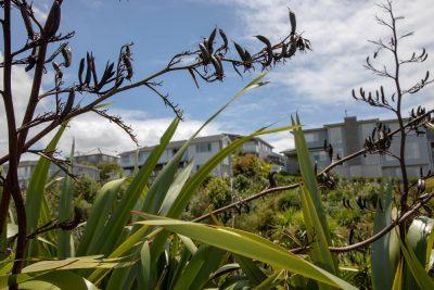 native plant regeneration
