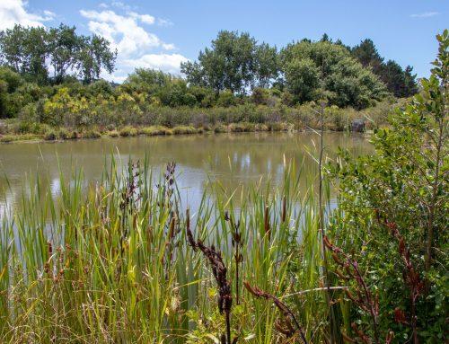 We've grown plants for Millwater Estate wetland areas